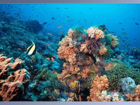 b_487_365_16777215_00_images_galerie_galeria2_Underwater-0012.jpg